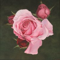 French rose (60 x 60 cm)